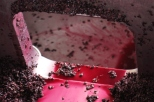 Red wine juice in the tank at Ata Rangi winery in New Zealand.